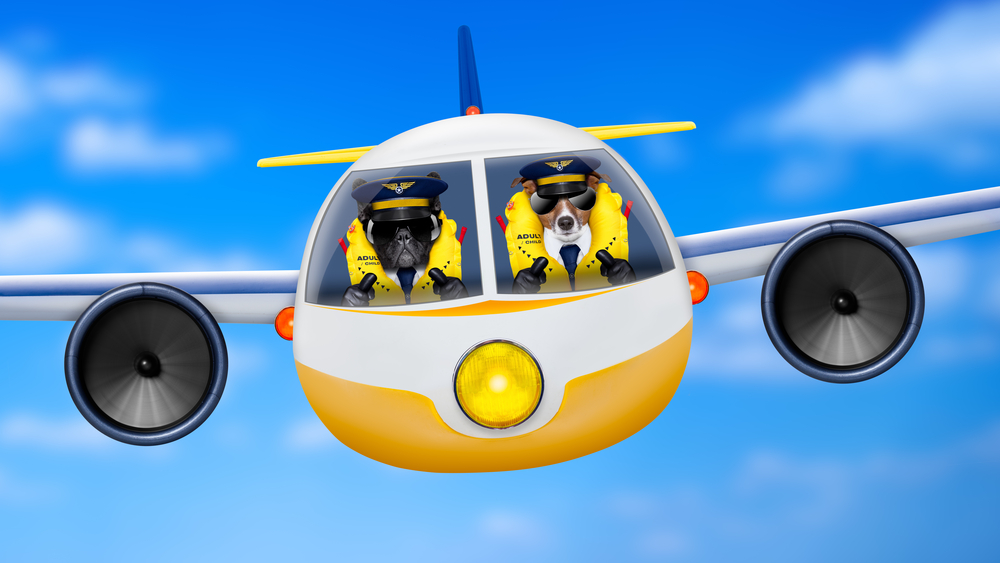 There's a new reality show about dogs flying airplanes