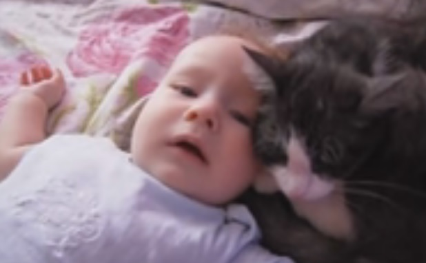 This cat thinks its this baby's mom, we can't even deal