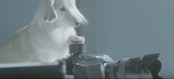 This adorable experiment lets dogs take pictures of their owners for a change