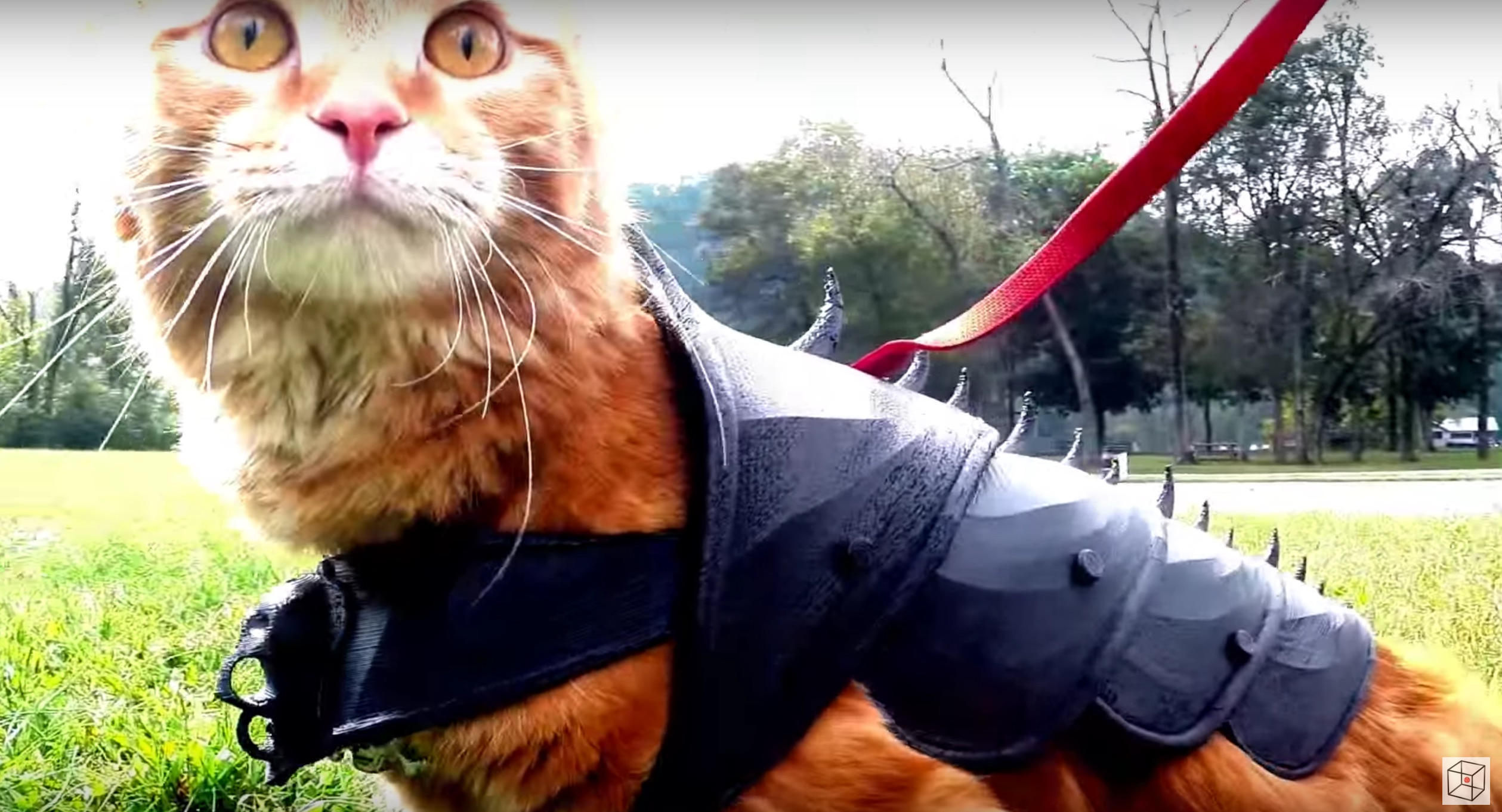 someone made armor for cats and its afreakingdorable