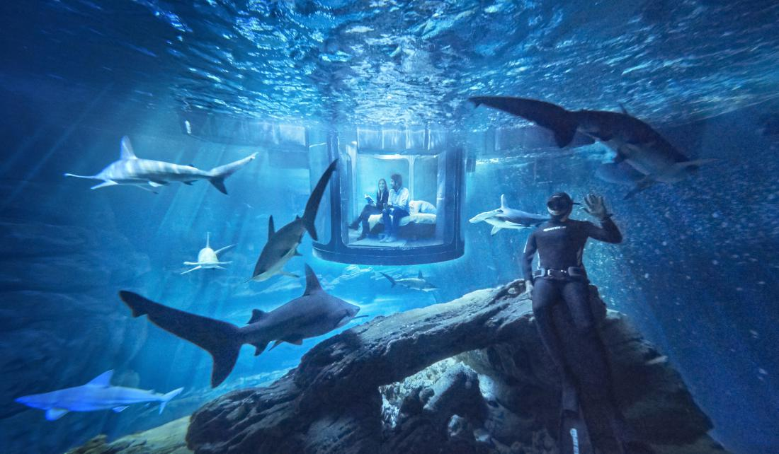 Are you brave enough to stay in this shark tank Airbnb?