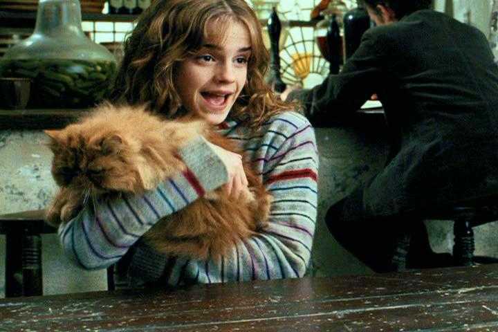 "This ""Harry Potter"" fan theory gives Hermione a major connection to the Potter family"