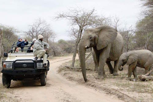Here's what it's like to be a South African safari guide