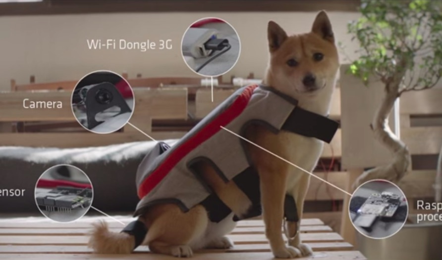 Your dog can now take photos by wagging her tail