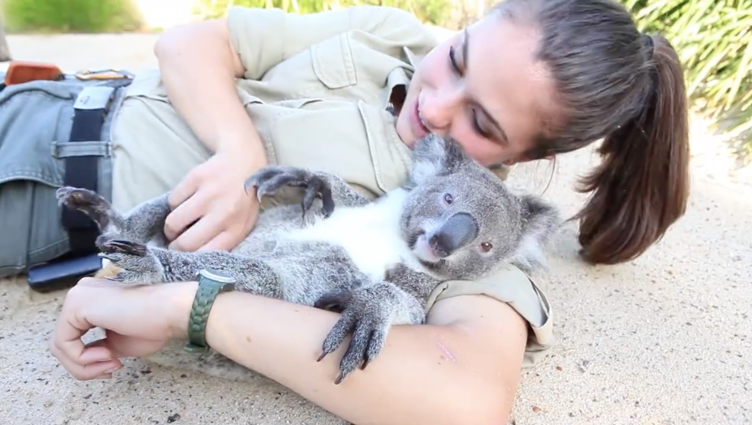 There's a lot we can learn from this koala getting a belly rub