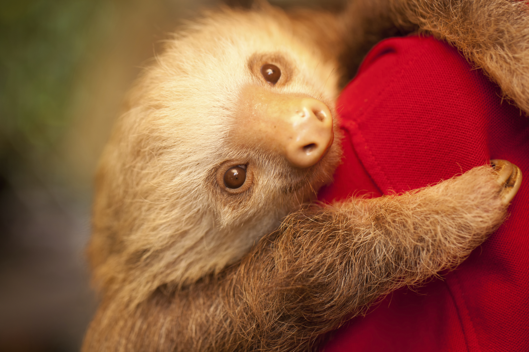 15 subtly adorable ways to cover yourself in sloths