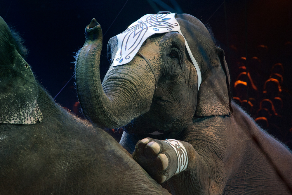 The Ringling Bros. circus has officially retired all of its elephants