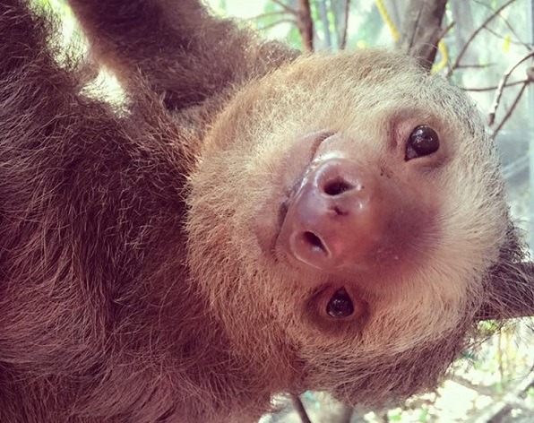 There is not enough cute in the world for these rescued baby sloths