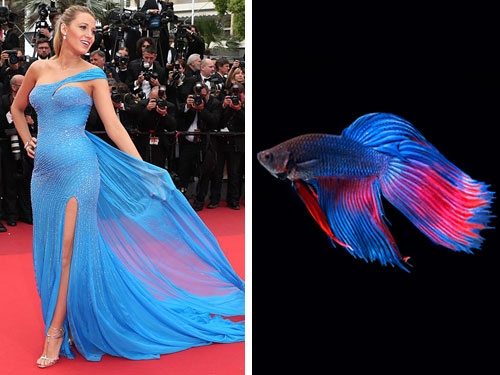 15 random things celebs looked like on the Cannes red carpet