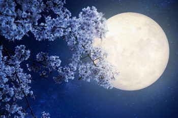This is what tonight's Flower Moon means for us all