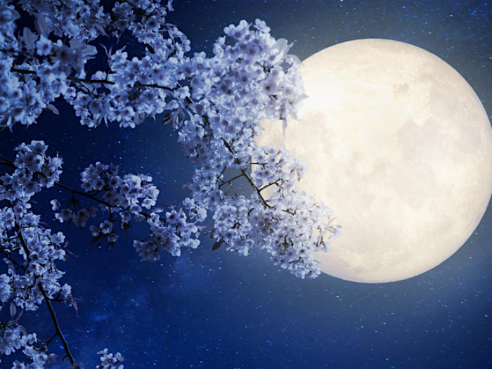 This Is What Tonight S Flower Moon Means For Us All