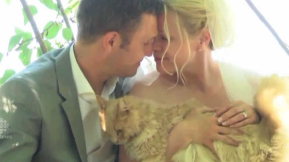 This couple got married in front of 1,100 cats