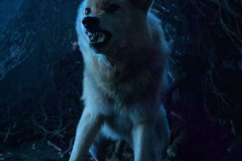 "We really need these Direwolf deaths to come to a stop on ""Game of Thrones"""