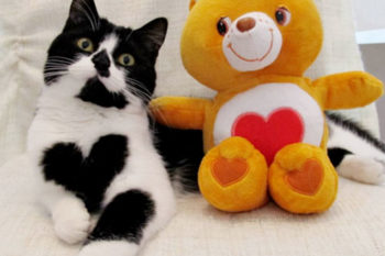 This cat literally has a heart on her chest and we can't even