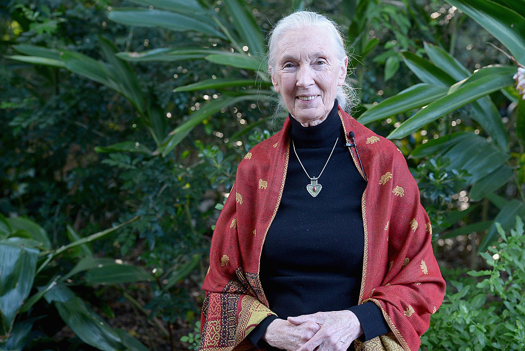Jane Goodall just penned the most thoughtful letter in response to the Gorilla that was killed at the Cincinnati Zoo