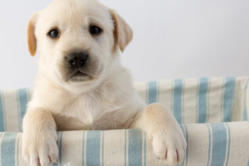 Science says this is probably why dogs are so sweet