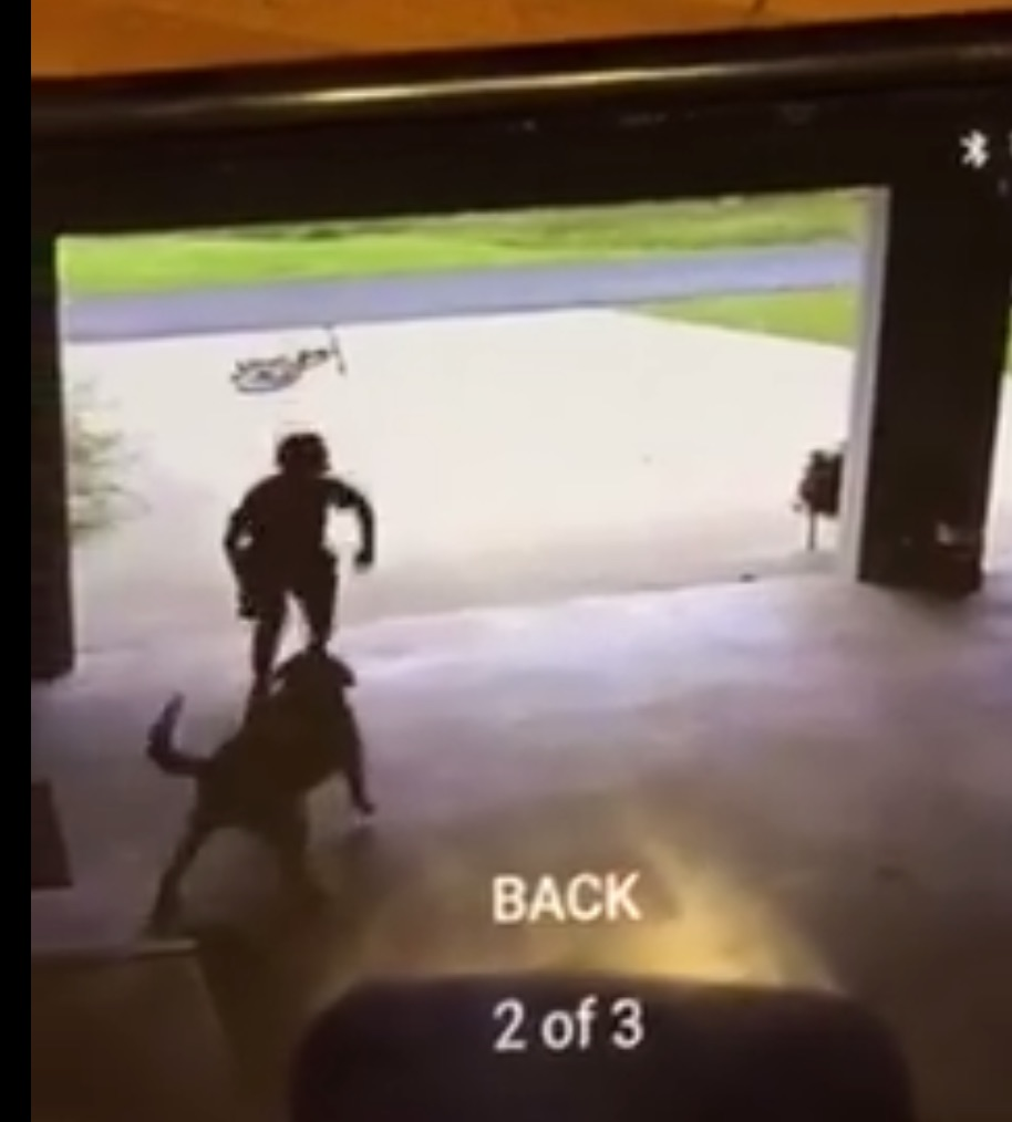 This little boy had the best reason to sneak into his neighbor's garage