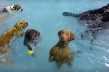 This awkward dog in the pool is literally all of us at a party just wanting to go home