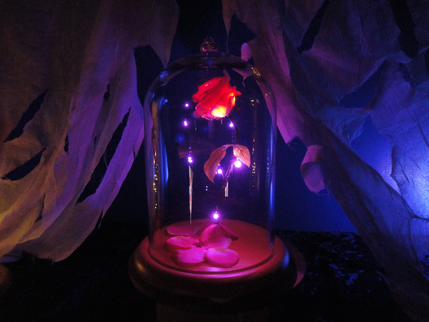 You can now get your very own magical enchanted rose, just like Belle