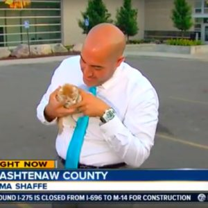 Stray kitten photobombs a live newscast, becomes most popular kitty ever