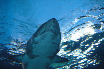 What you need to know about this year's Shark Week!