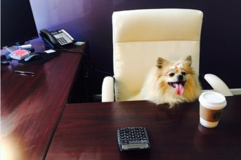 "The cutest photos from ""Take Your Dog to Work"" day, because it's today!"
