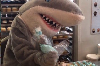 This shark trying to frost some cupcakes is all of us on Friday