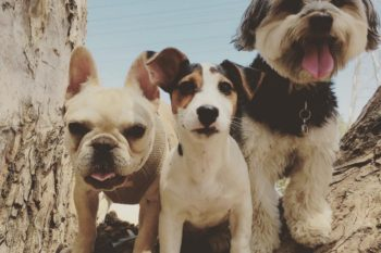 13 times Hilary Duff posted the best animal pics on Instagram