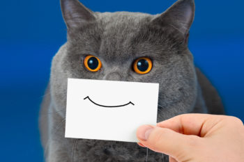10 ridiculously hilarious stock photos of cats, because why not