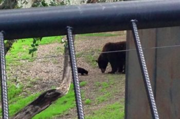 This stray cat and zoo bear and now BFFs