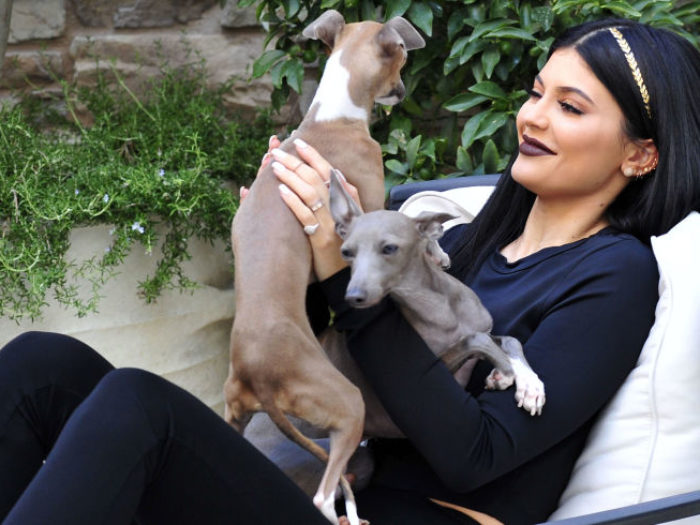 Kylie jenner s adorable dogs were transformed into secret for Tattoo secret life of pets