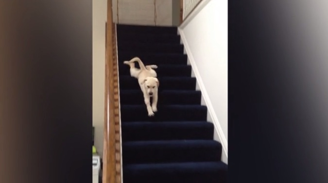 This puppy sliding down the stairs is all of us sliding out of work on Friday