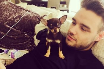 Congrats to Liam Payne on his brand new family member — an adorable puppy!