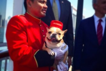 You can now travel with your furry friends on the Queen Mary 2