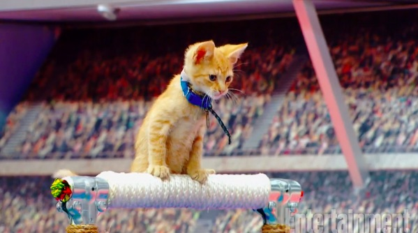 The Kitten Summer Games are the only kind of Olympics a cat lover needs