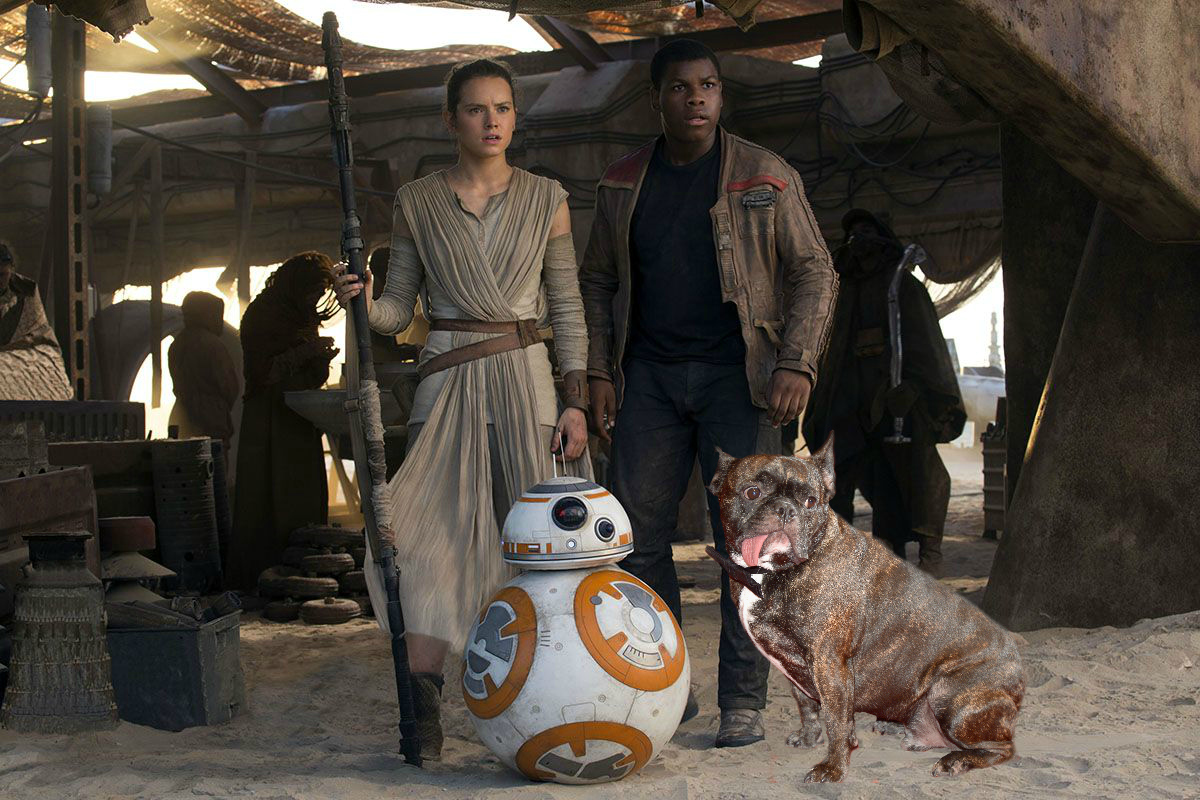 "Princess Leia wants her dog to be in the next ""Star Wars,"" and we say YES"