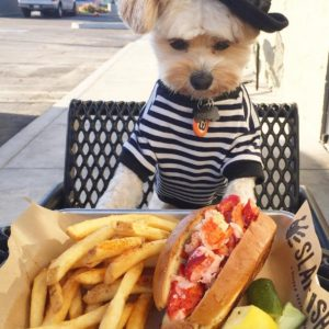 This dog is a food blogger and soon to be your favorite food blogger