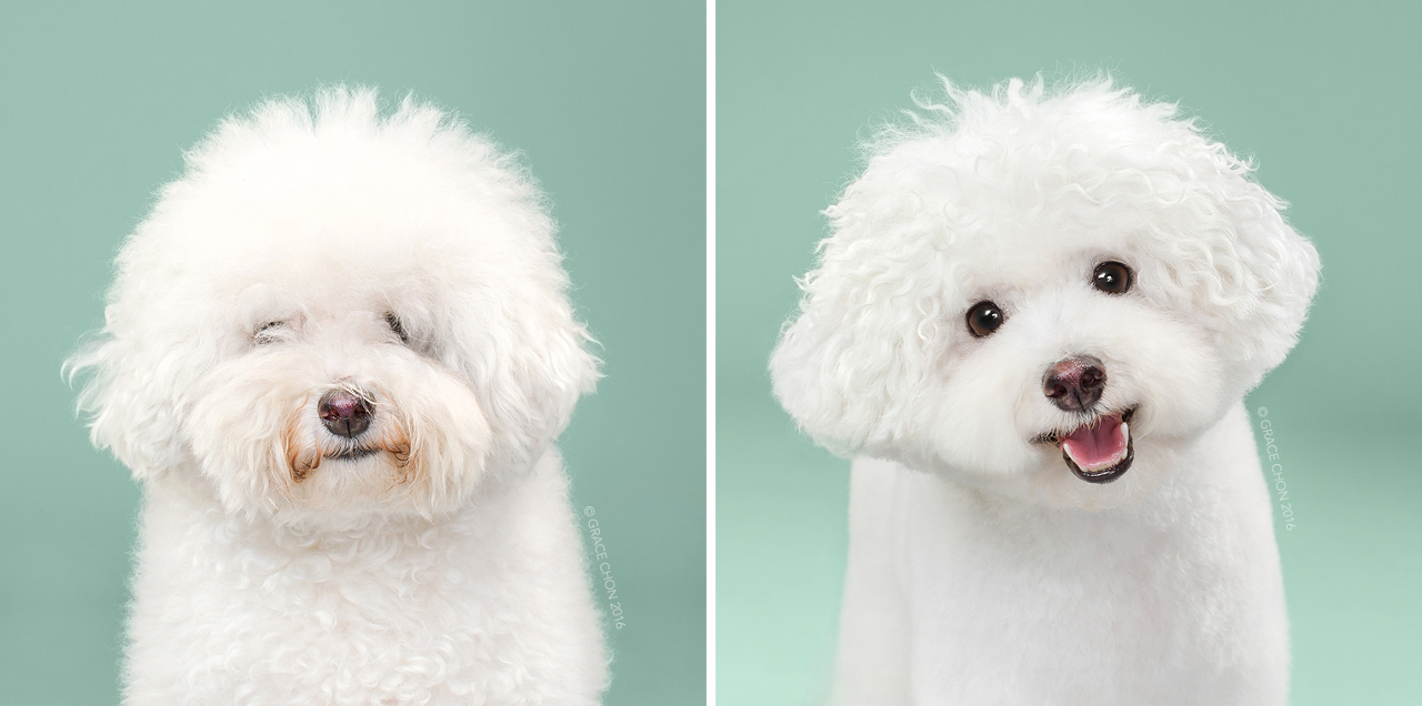 We are legit obsessed with these before-and-after photos that make these dogs look like stuffed animals