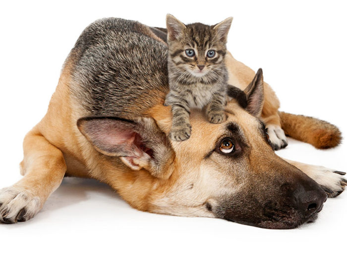 Pictures Of Cats And Dogs Catanddog