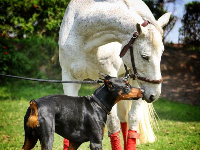 Well, here's a bunch of horse and dog BFFs because you deserve them