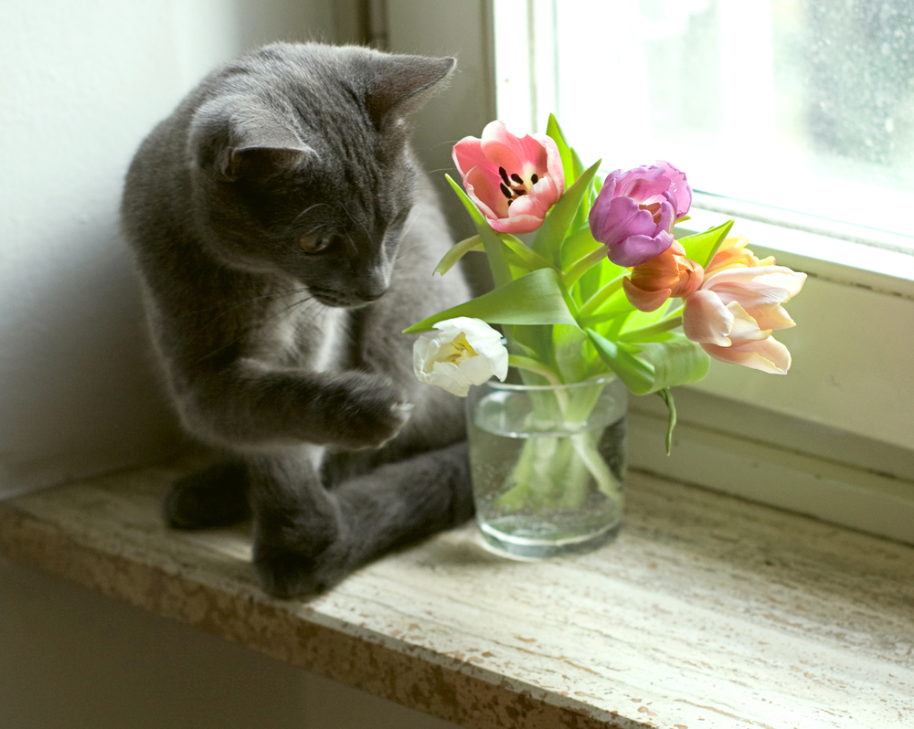 These super common flowers could poison your beloved pets!