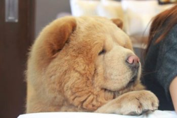 This *bear dog* is your new favorite thing on the internet