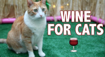 Cat Wine Taste Test