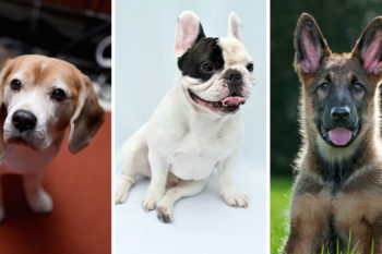 Here's the dog breed you should adopt, based on your zodiac sign