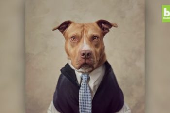 OMG, our hearts: Photographer dresses up abandoned dogs to help them get adopted
