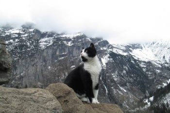 Hero kitty! This cat helped a lost man get down a mountain in Switzerland