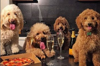 Dogs Who Brunch is *the* Instagram account for all your puppy and foodie needs