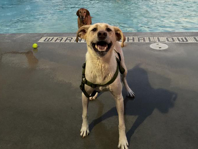 This water park opens up its pools and fountains to dogs, and it's super adorable