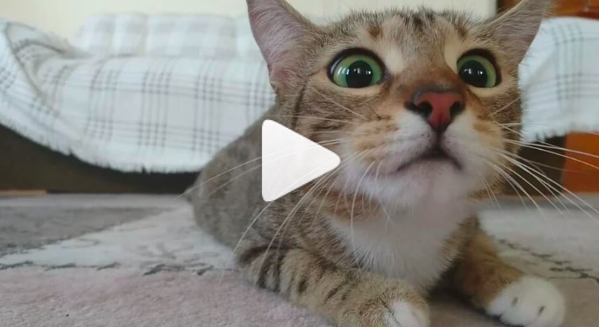 This poor little cat watching a horror film will make you squeal