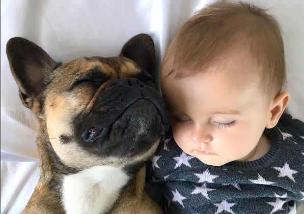 This Frenchie and his baby human are ultimate #bffgoals
